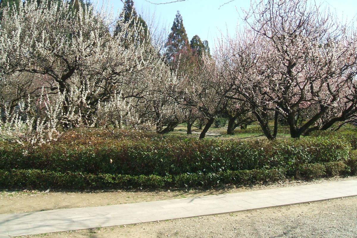 梅林寺に行ってきました。