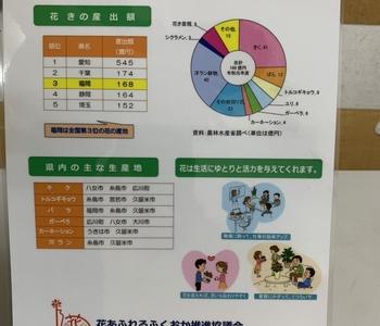 福岡県は花の生産が盛んです。